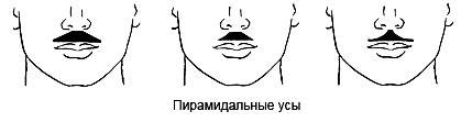Пирамидальные усы фото