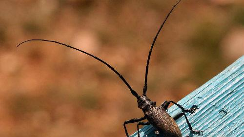 тараканы с большими усами