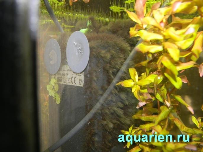 Вьетнамка на акваримном фильтре