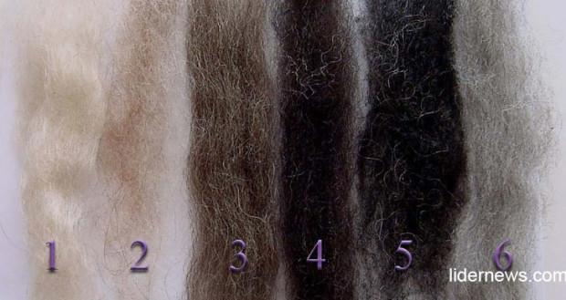 Волосы с различным процентным содержанием седых волос