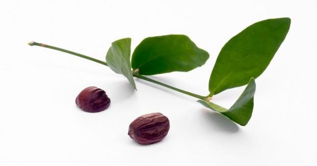 Семена Жожоба