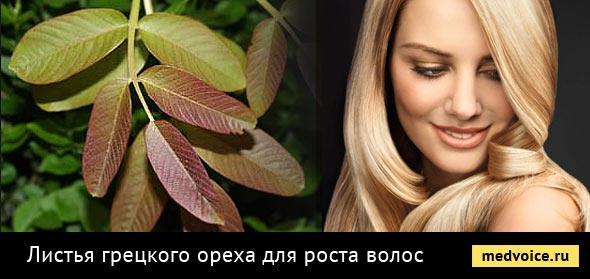 листья грецкого ореха для роста волос фото